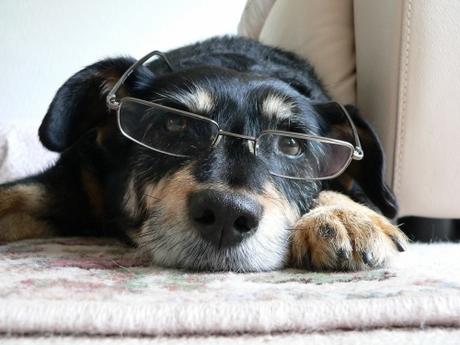 intelligent-dog