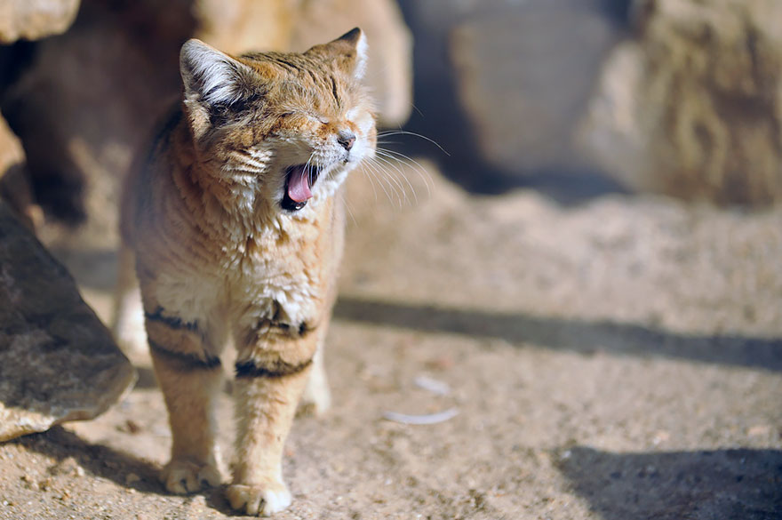 sand-cats-kittens-forever-10__880